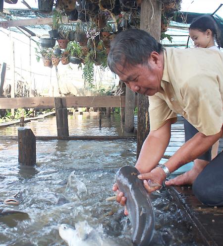 Tôi thích nhất lúc cho ăn được sờ đầu cá, cầm nó lên rồi để nó tuột khỏi tay mình, ông Phạm Văn Cường bảo. Ảnh: Phan Diệp.